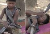 Cậu bé 7 tuổi kết thân, tắm và ngủ với rắn hổ mang