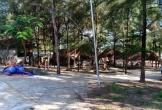 Thanh Hóa xóa rừng phòng hộ làm du lịch: Giao dự án cho công ty