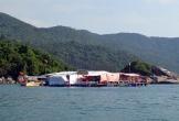Phú Yên: Sắp xếp bè nổi phục vụ ăn uống tại các khu du lịch vào bờ trước Tết