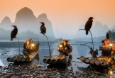 Độc đáo nghệ thuật câu cá trên sông ... bằng chim