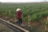 Xây dựng mô hình phát triển kinh tế gắn với vệ sinh an toàn thực phẩm
