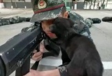 Video: Chó liếm mặt lính bắn tỉa vẫn không run tay