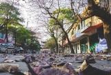 Ngắm nhà Hà Nội đẹp ngỡ ngàng mùa cây thay lá