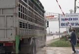 Thanh Hóa tìm đầu ra cho người nuôi lợn khi dịch tả hoành hành