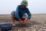 Nguyên nhân ngao chết là do sâu biển gây hại