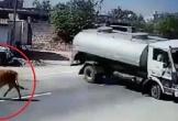 Bò thả rông lững thững sang đường, tài xế xe bồn bẻ lái 180° khét lẹt như phim