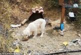 Chú chó trung thành chờ chủ ở nơi xảy ra tai nạn suốt 18 tháng