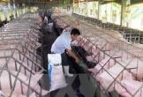 Khuyến cáo biện pháp chăn nuôi an toàn sinh học