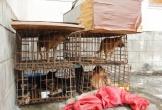 Thanh Hóa: Bắt giữ nhóm đối tượng trộm hơn 40 con chó trong 1 đêm