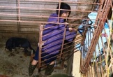 Đường dây trộm hơn 100 tấn chó: Làm hầm