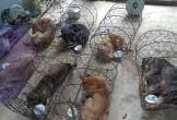 Phá đường dây trộm chó hơn 100 tấn ở Thanh Hóa: Tang vật xử lý thế nào?