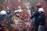 Tết Nguyên Đán: Bắc Bộ rét đậm, rét hại