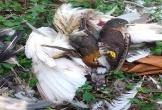 Chấm dứt tình trạng săn bắt chim trời ở Thanh Hóa