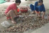Cần giải pháp thấu tình đạt lý khi thu hồi bãi nuôi ngao của ngư dân xã Hoằng Phụ