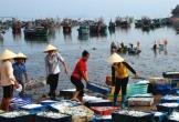 Ngư dân Thanh Hóa gặp khó sau dịch COVID-19