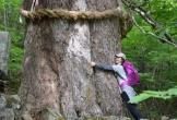 'Tắm rừng' như người Nhật