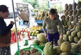 Sầu riêng, me… Thái Lan ồ ạt vào Việt Nam