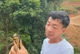 Ở trang trại 10.000m2, Việt Hoàn tự nhận 'là người nghèo nhất'