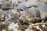 Đàn trâu 14 con lăn đùng ra chết, người dân nghi bị kẻ gian đầu độc