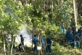 Cấm rừng ở những nơi có báo động cháy từ cấp 4 trở lên