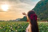 Đầm sen kỳ lạ nở tới tận mùa Đông dưới chân núi Ngọa Long