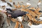 Đảo mèo, làng cáo và loạt vùng đất trên thế giới bị động vật chiếm giữ