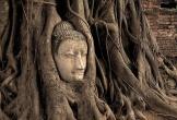Bí ẩn đầu tượng Phật 700 năm tuổi ẩn mình trong rễ cây cổ thụ