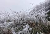 Băng tuyết phủ trắng đỉnh núi ở Nghệ An trong giá lạnh -3 độ C