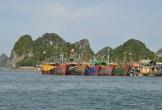 Điều tra vụ hai vợ chồng ngư dân tử vong bất thường trên vịnh Bái Tử Long