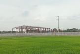 Chiếm đất nông nghiệp, Công ty Lam Kinh bị phạt 120 triệu đồng