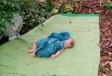 Bé con nằm ngủ ngon giữa vườn vải ở Bắc Giang: Em đã theo mẹ đi thu hoạch từ đêm
