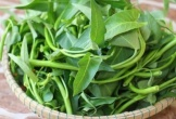 Lợi ích đối với sức khỏe của rau muống mà bạn cần biết